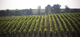 Primeurs 2016 : Top appellations rive gauche